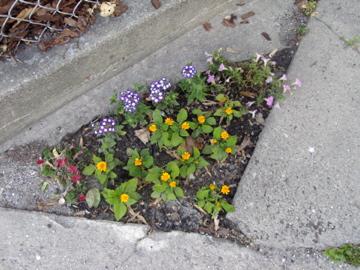 Urban flowers!