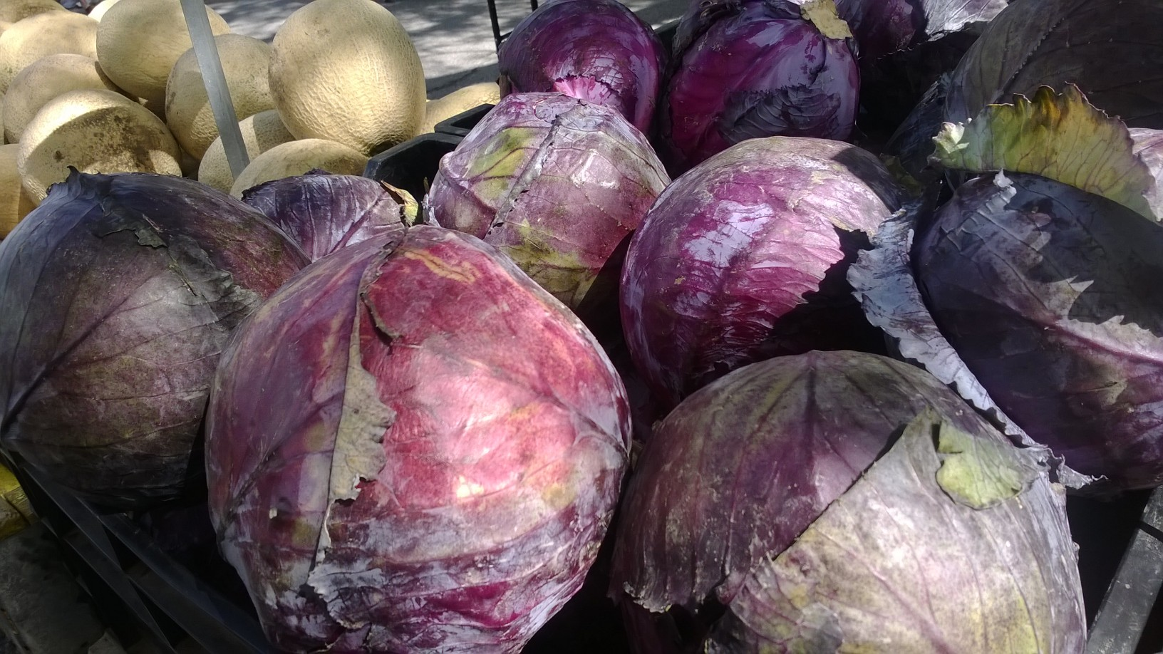 Purple cabbage!