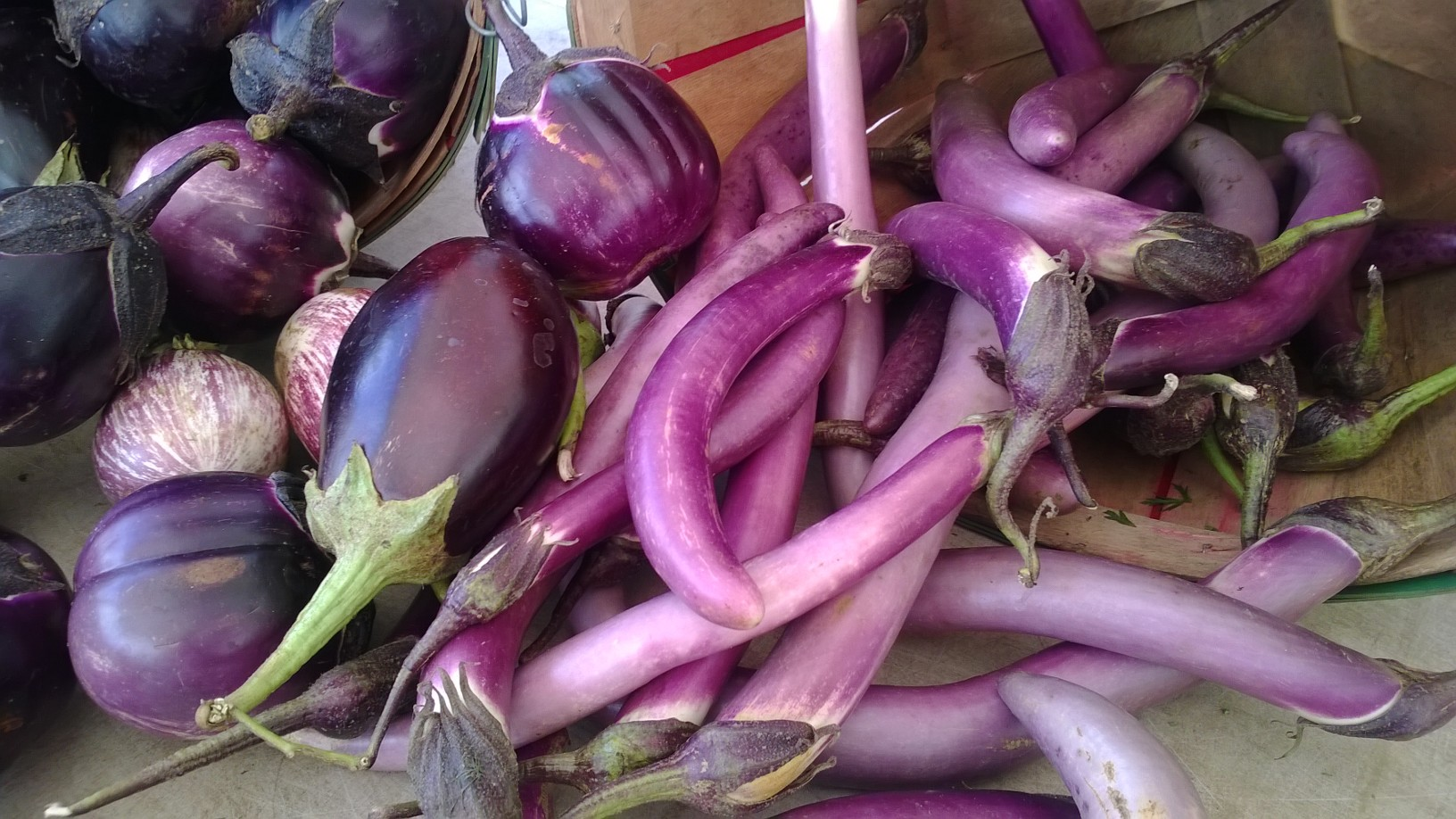 different varieties of eggplants